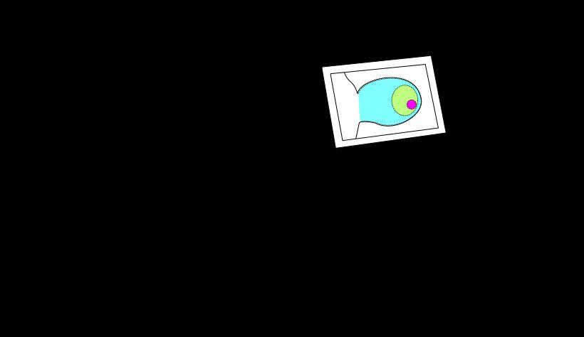 TVN Image
